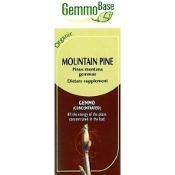 Mountain Pine buds [Pin] - 50ml